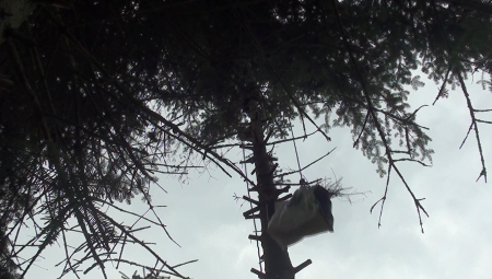 zabbalin - couper un arbre