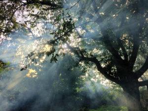 arbre luisetaines